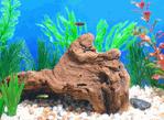 Fish Culture 2